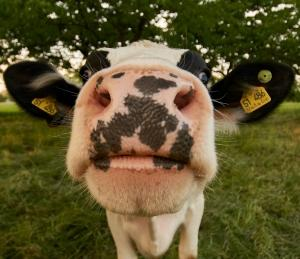 Phosphatidylserine and Sleep - What's the Connection - Curious Cow