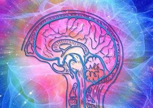 Supplements for ADHD Adults - UMP - Enhanced Cognition